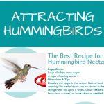 Attracting Hummingbirds Infographic